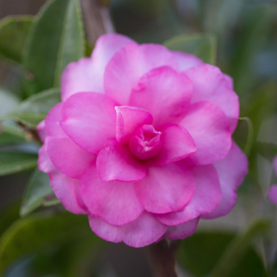 yuri_panchul_seedling_0138_20151114_165653
